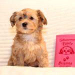 2019_01_14_HAVANESER_Welpen_Hundebabies_0220