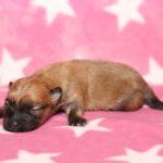 2019_10_HAVANESER_BOLONKA_Welpen_Hundebabies_0319