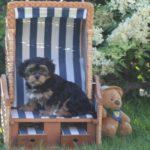 2020_10_HAVANESER_BOLONKA_Welpen_Hundebabies_0345