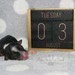 2021_05_HAVANESER_BOLONKA_Welpen_Hundebabies_0616