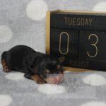 2021_05_HAVANESER_BOLONKA_Welpen_Hundebabies_0618