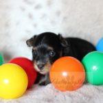 2021_05_HAVANESER_BOLONKA_Welpen_Hundebabies_0636