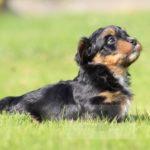 2021_05_HAVANESER_BOLONKA_Welpen_Hundebabies_0653