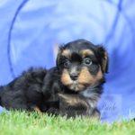 2021_05_HAVANESER_BOLONKA_Welpen_Hundebabies_0658