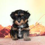2021_05_HAVANESER_BOLONKA_Welpen_Hundebabies_0663