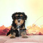 2021_05_HAVANESER_BOLONKA_Welpen_Hundebabies_0667